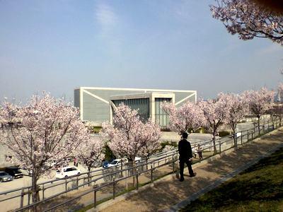 桜咲く大阪狭山池博物館